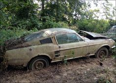 "1967 Ford Mustang - ""I found this '67 Mustang Fastback along the fence line of an old farm. It looks like it hasn't moved in decades. The trees are growing over it and it is sinking into the dirt. The underside looks pretty rusty, but the car is otherwise complete."""