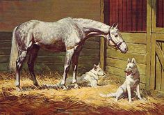 Gray Horse & Two White Dogs - Sam Savitt My favorite illustrator- This print captures the friendship between this beautiful gray horse and two German Shepherds. Pretty Horses, Beautiful Horses, Horse Posters, Horse Artwork, Painted Pony, Horse Drawings, Gray Horse, Equine Art, Horse Pictures