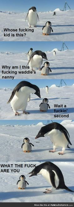 Yelling Pengy