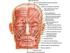 Aula de Anatomia - Sistema Muscular - Face