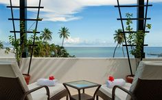 Image result for PALM TREE VIEW FROM APPT