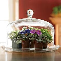 Tablepot terrarium - I love this idea! What a great way to make use of that cake platter instead of storing it away!