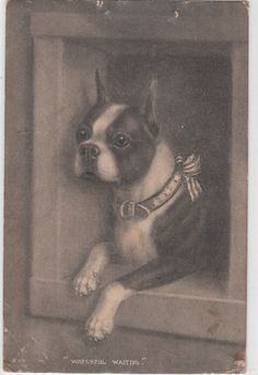 PRECIOUS!!! Antique Dog Art Postcard Boston Terrier by Museumofantiquepaper