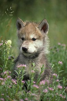 WOLF PUP.  WHAT IS THAT PRETTY SWEET SMELLING THING.