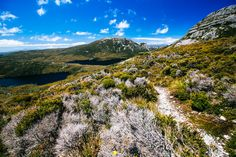 Tips for hiking the Overland Track - things you should know before trekking in Tasmania.