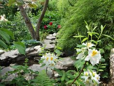 the creek in my garden, in the foreground a white azalea