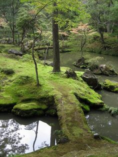 Moss Temple Japan