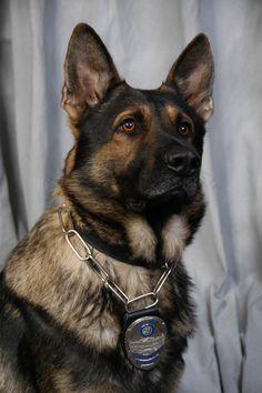 October 2011 | UW-Madison Police Department #german shepard dog