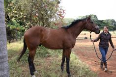 Our big boy, Group Captain aka Captain. Thoroughbred gelding.