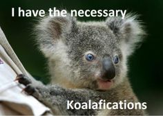Koalafications.