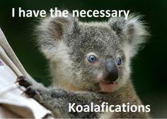 Koalafications.