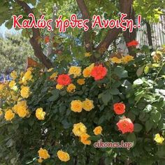 Εικόνες για καλωσόρισμα της Άνοιξης - eikones top Life Quotes, March, Plants, Spring, Quotes About Life, Quote Life, Living Quotes, Quotes On Life, Plant