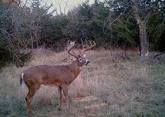 trophy-class-white-tail-deer.jpg (448×318)