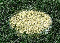 Solarisation des fleurs d'olivier, préparation d'un élixir floral. DEVA Les Émotions
