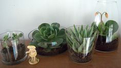 succulents in glass vessels
