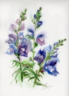 Snapdragon watercolor original painting by VerbruggeWatercolor, $74.00