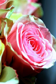 I love roses like this!!!