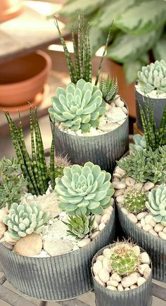 Most current Screen Garden Planters succulents Tips Pots, tubs, and half barrels stuffed with flowers add appeal to any garden, but container gardening Indoor Plants, Plants, Planting Flowers, Flowers, Succulent Terrarium, Garden Planters, Container Gardening, Succulent Garden Diy, Garden Design