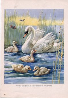 """Vintage CHILDREN'S BOOK PAGE """"The Swan"""" from 1940's Farmyard Friends. $7.00, via Etsy."""