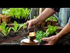 CORRUPT Judge Rules Government Can Ban Vegetable Gardens Because They're...