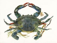 Crab watercolor-crab Art-Beach House Decor, Blue Crab Print-ocean, beach, nautical,decor on Etsy, $35.00