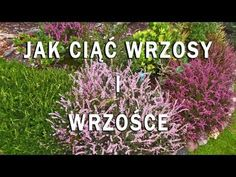 blog szalonej zielarki, ogrodniczki i natury miłośniczki Pergola Images, Pergola Kits, House Plants, Landscape Design, Home And Garden, Herbs, Creative, Youtube, Flowers