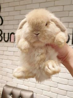Look at my bunny! (Does not approve. Cute Baby Bunnies, Funny Bunnies, Lop Bunnies, Bunny Bunny, Funny Kittens, Cute Little Animals, Cute Funny Animals, Tier Fotos, Cute Animal Pictures