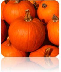 Pumpkin (Small Sugar) Seeds at $.99/pack | Grow Organic Pumpkin 100% NON-GMO