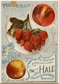 GH and JH Hale - Seed Catalogs from Smithsonian Institution Libraries Vintage Diy, Images Vintage, Vintage Type, Vintage Labels, Vintage Signs, Vintage Ephemera, Vintage Pictures, Vintage Graphic Design, Graphic Design Typography