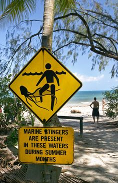 this is a place I won't be traveling to! Jelly fish warning sign on beach, Cape Tribulation, Australia (© Nic Cleave Photography/Alamy)