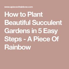 How to Plant Beautiful Succulent Gardens in 5 Easy Steps - A Piece Of Rainbow