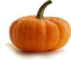 Moschata Pumpkin - Fruit Vegetable
