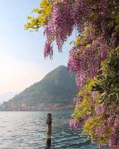 Un piccolo assaggio della #Pasqua sul #lagodiseo! Auguri!   Foto: @yougardener  #italiait #ilikeitaly #laghilombardi #laghiitaliani #lago #inlombardia #iseolake #inlombardia365 #ilpassaporto #romantico #buonapasqua #lakeiseo http://ift.tt/2odZjEn - http://ift.tt/1HQJd81