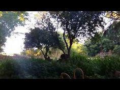 Canto del zorzal colorado - Tierra de Gauchos