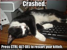lolcat fix your computer