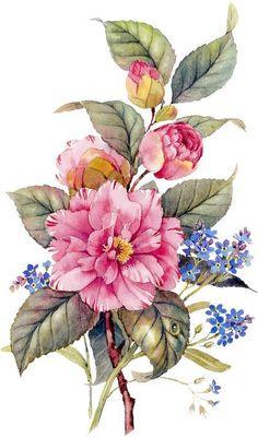 bouquet of roses, painted - Blumen Art Floral, Watercolor Flowers, Watercolor Paintings, Watercolour, Floral Design, Illustration Botanique, Botanical Illustration, Botanical Flowers, Botanical Prints