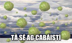 Ag cur baistí! Irish Memes, Class Rules Poster, Irish Language, Irish Pride, Language Lessons, It's Raining, Celtic, Scotland, Ireland