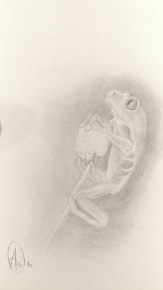 Frog in graphite