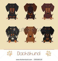 Dachshund Fotos, imágenes y retratos en stock | Shutterstock