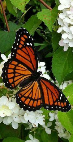 Actueel - Vlinderlokkende planten voor een betoverende tuin - https://www.tuincentrumoverzicht.nl/actueel/5436/vlinderlokkende-planten-voor-een-betoverende-tuin