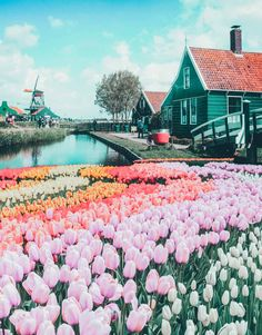 Top things to do in the Netherlands! See the canals of Amsterdam, fields of tulips, Anne Frank Museum, Cube Homes of Rotterdam, and Zaandam Netherlands. adventure travel Top Things to do in the Netherlands Anne Frank, Rotterdam, Destination Voyage, European Destination, Beautiful Places To Travel, Pictures Of Beautiful Places, Inspiring Pictures, Travel Aesthetic, Travel Goals