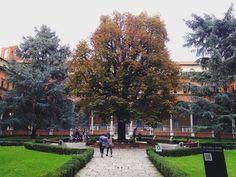Uma visão romântica do outono, no pátio interno da Università Cattolica del Sacro Cuore
