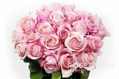 Wholesale Light Pink Roses are timeless flowers that are elegant with a hint of girly. The soft pink tones of this rose pair lovely with many different colors, and is perfect for wedding flower arrang