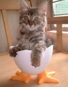 Cat Humor | Which came first? The cat, the chicken or the egg?