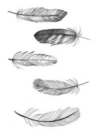 Feathers- I really want to try incorporating this into a tangle drawing