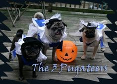 The 3 Pugateers - an all-pug rendition of The Three Musketeers, thanks to these amazing bookish pet costumes.