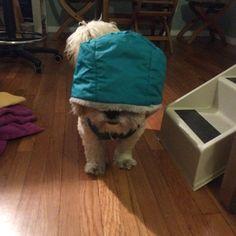 "@jackiecous's photo: ""cool dog #shortymerlin"""