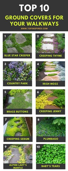 Garden Planning Awesome Tough groundcover ideas that won't get washed away - TOP 10 Plants and Ground Cover for Your Paths and Walkways Ground Cover Plants, Garden Yard Ideas, Ground Cover, Plants, Garden Paths, Lawn And Garden, Outdoor Gardens, Garden Planning, Backyard