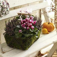 Herbstlicher türkranz M Citrouille /& des pommes de pin automne herbstdeko Dekokranz 33 cm