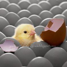 God's Paintbrush of Grace: Chicken or Egg